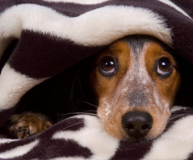 Seu cão sofre com fogos de artifício? Conheça um gel que pode ajudar