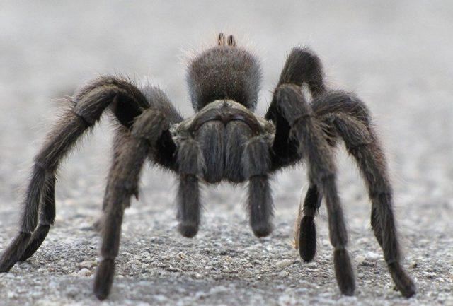 Morre a aranha mais velha do mundo