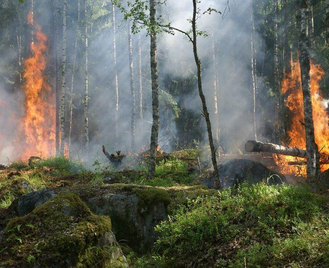 Mato Grosso pode prorrogar até outubro proibição de queimadas