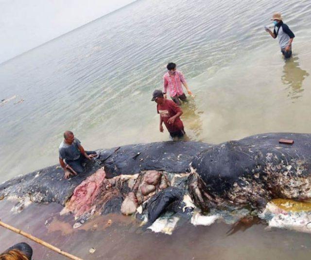 Baleia encontrada morta na Indonésia tinha 6 kg de resíduos de plástico no estômago