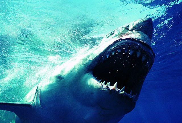Pescador é abocanhado bem na cabeça por tubarão e sobrevive milagrosamente