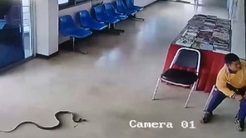 Cobra invade delegacia e ataca homem na recepção