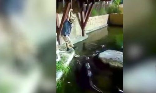 Homem cai em recinto infestado de jacarés famintos