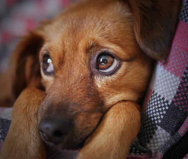México registra quatro casos de Covid-19 em cachorros