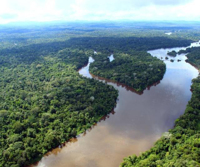 Protocolo de Nagoya pode atrair investimentos no Pará e ajudar na preservação da biodiversidade