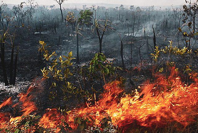Prefeito de Barão de Melgaço (MT) decreta estado de emergência após mais de 40 mil hectares de mata queimados