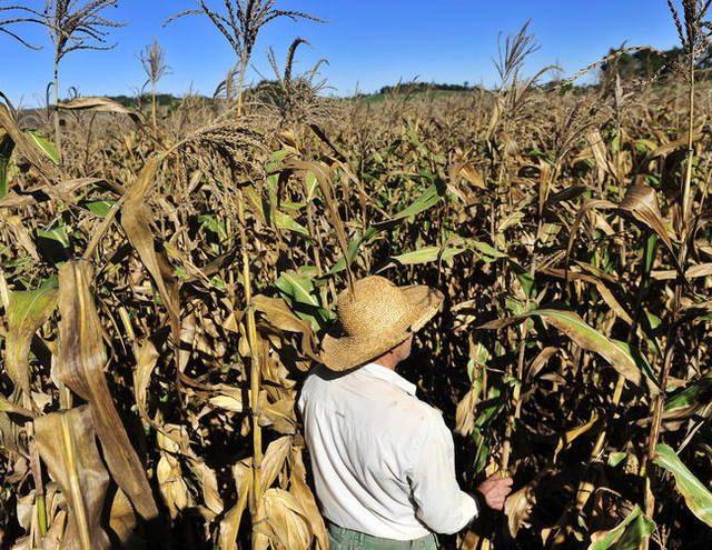 Famílias de 61 municípios do semiárido nordestino serão incluídas no Programa Fomento Rural