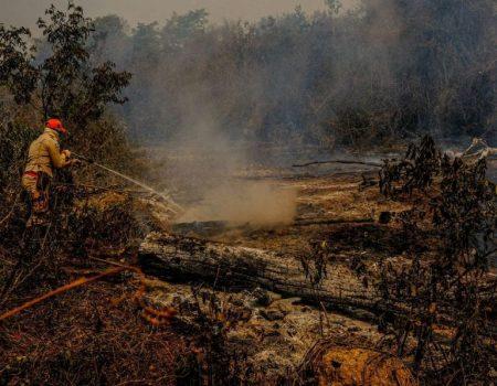 Pantanal tem cerca de 12% de sua área atingida por queimadas