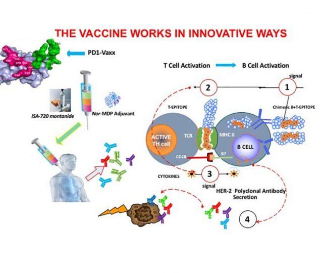"""Vacina contra o câncer passa em testes com animais: """"segura e extremamente eficaz"""""""