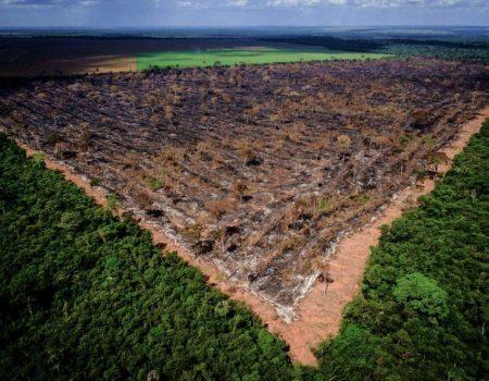 Governo afasta sete investigados em operação contra exportação ilegal de madeira