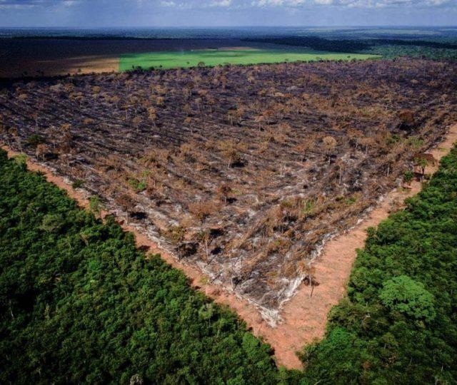 PF faz maior apreensão de madeira da história na Amazônia