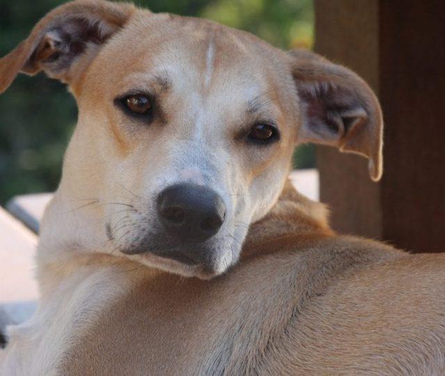 Pesquisadores da Fiocruz encontram anticorpos contra Covid-19 em cão e gato de rua